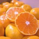 風邪に効く食べ物について おすすめの食材を紹介します