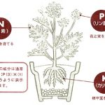 園芸肥料の基本について 肥料が少なすぎるとどうなる? 肥料が多すぎるとどうなる?