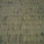 畳のお手入れ方法 畳にカビの発生した時の、お手入れ方法を紹介します。