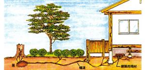 シロアリの侵入経路の80%は地中からです