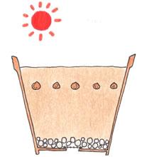 クロッカスの植え方