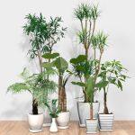 観葉植物の管理方法について 枯らさずに元気に育てるコツを紹介します