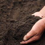 良い土の作り方 植物毎にに適した、土づくりの方法を紹介します