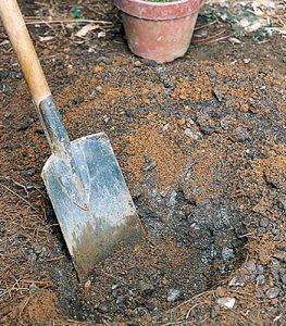 植え穴を掘る