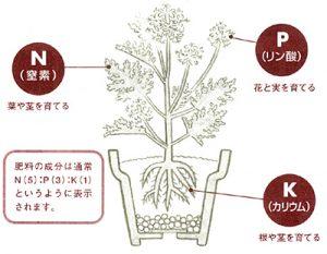 肥料の三大要素