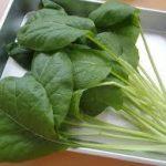 うまい菜(ふだん草)の育て方について 上手に美味しく育てるコツを紹介します