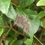 毛虫(ケムシ)の退治・駆除・予防の仕方について 農薬を使用しない方法や効果的な農薬・おすすめの方法を紹介します