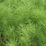 スギナの駆除・除草方法について 除草剤を使用しない方法や根まで枯らす方法を紹介します