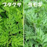 ブタクサの除草方法について 除草剤を使用しない方法や根まで枯らす方法を紹介します