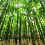 竹の駆除・除草方法について 除草剤を使用しない方法や根まで枯らす方法を紹介します