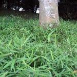 笹(ササ)の駆除・除草方法について 除草剤を使用しない方法や根まで枯らす方法を紹介します